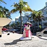 Tinkerbelle the Dog Lives Like a Queen on Her Trip to South Beach