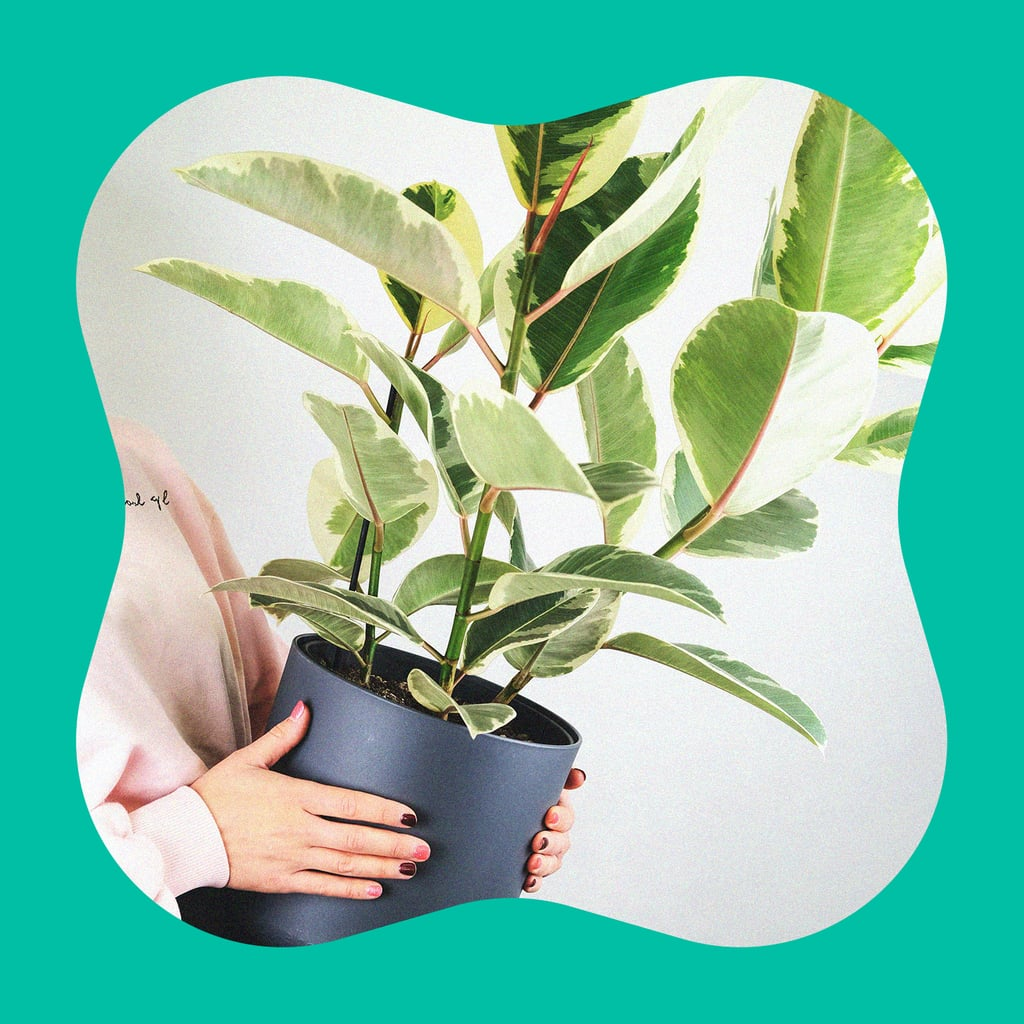 Houseplant Tips and Tricks For Beginners