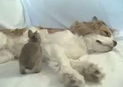 Dog Nurses Baby Bunnies to Health