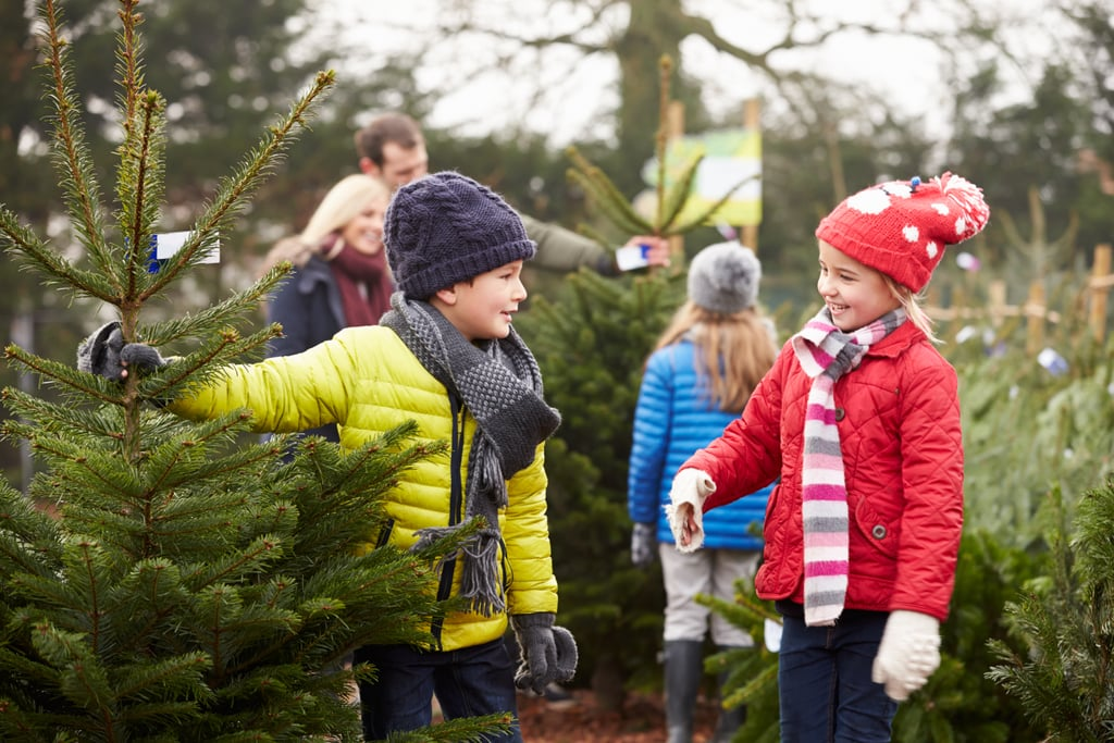 Get a Christmas tree from a tree farm