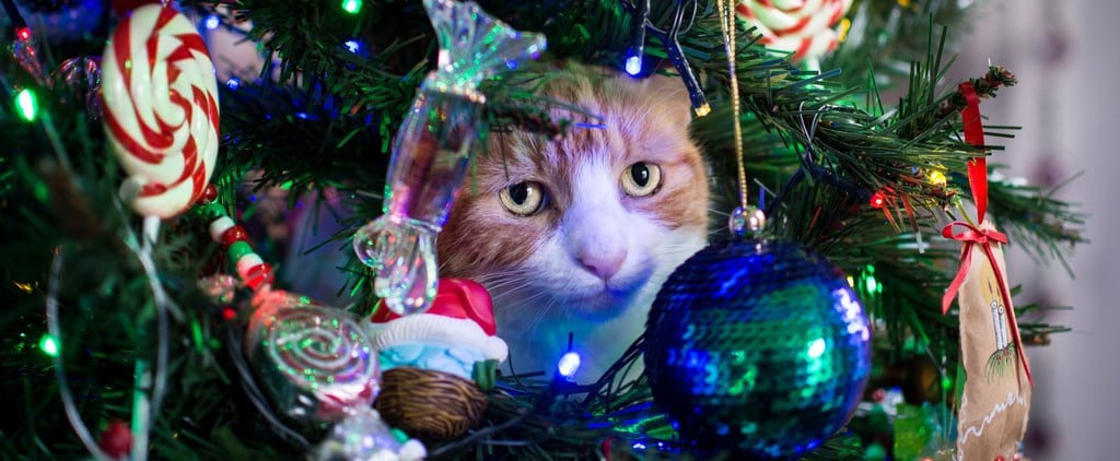 Asda Is Selling a Pet-Safe Half Christmas Tree