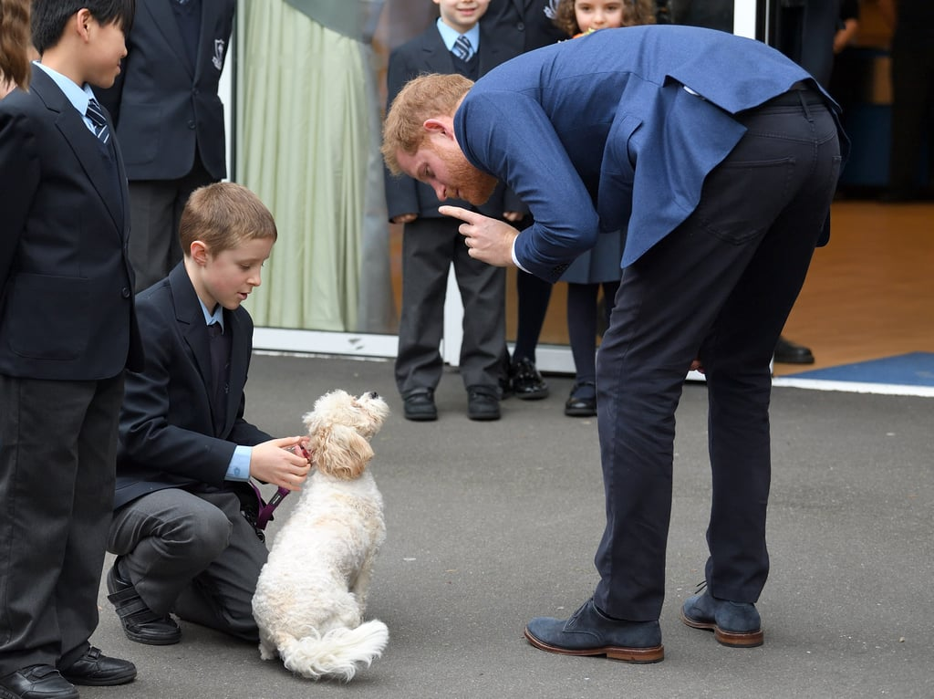 Prince Harry's Cute With This Little Dog Has Me Squealing With Delight