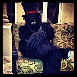 Reggie Bush monkeyed around in a furry costume. Source: Instagram user reggie_bush22