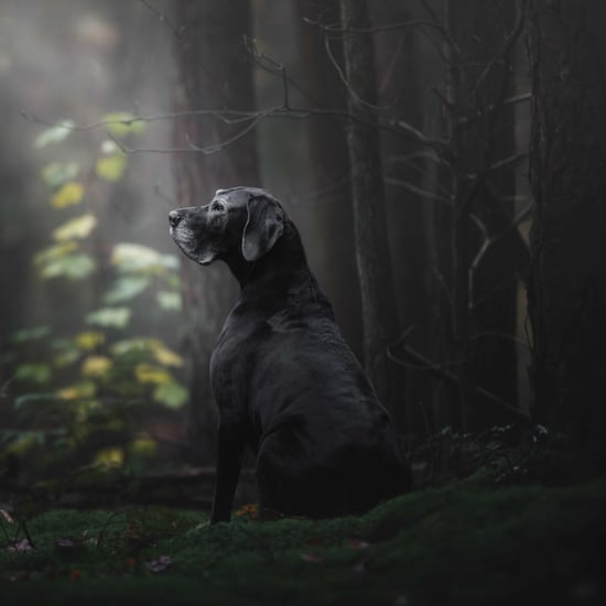 Kennel Club's Dog Photographer of the Year Contest Photos
