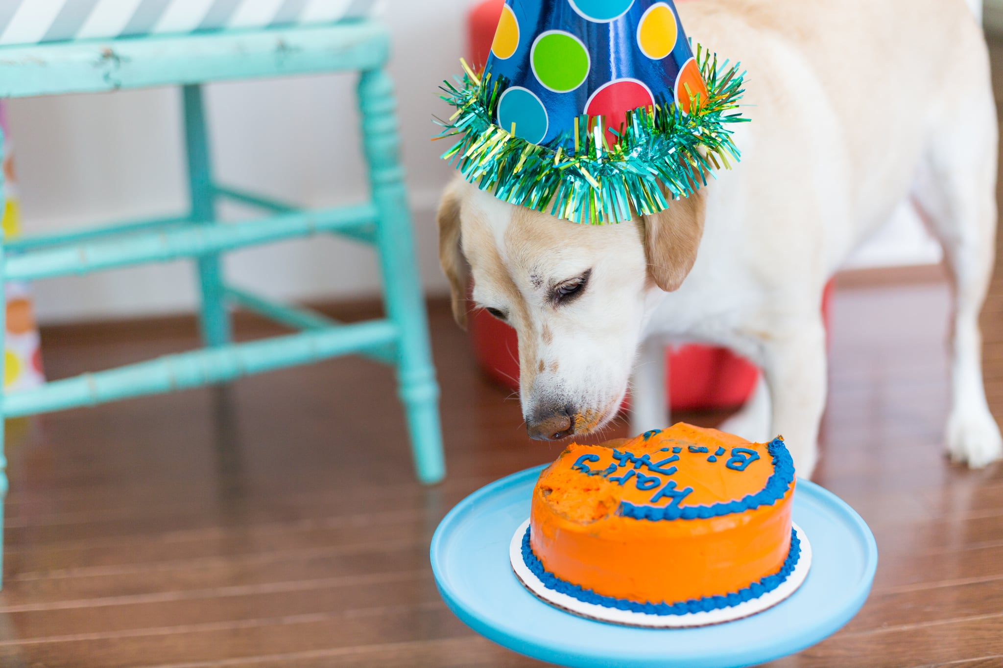 How to Throw a Birthday Party For Your Dog | POPSUGAR Pets