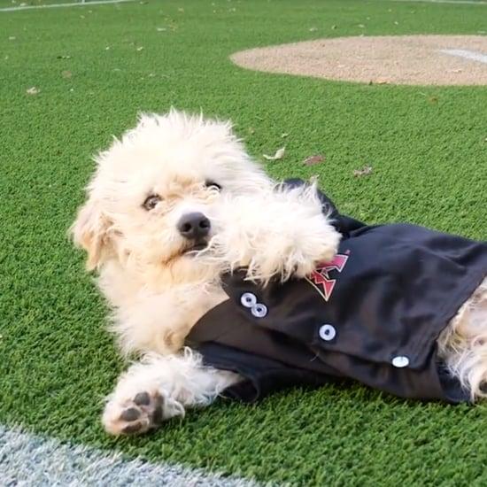Dog Adoption at Diamondbacks' Stadium | Video