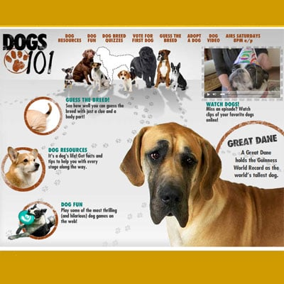 Dogs 101: What Did You Learn in Episode 106?