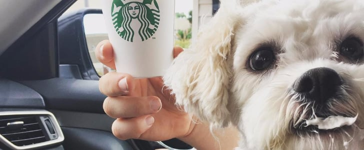 Dogs Eating Puppuccinos From Starbucks