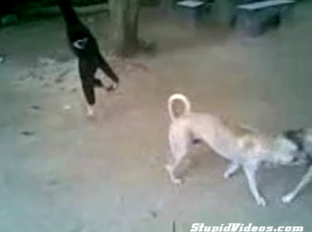 Dudes+ Gibbon + Dogs = Fun