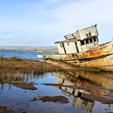 Lastly, don't forget to carve out time to visit the infamous Point Reyes Shipwreck. Beached on a sandbar in the small town of Inverness, this abandoned fishing boat was once in danger of being removed. Yet, thanks to a group of local photographers, this hauntingly beautiful decaying vessel is here to stay and warmly welcomes your curious mind!