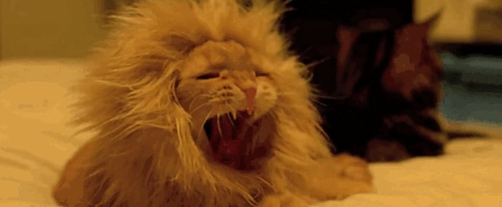 Meow! The 47 Best Cat GIFs of All Time