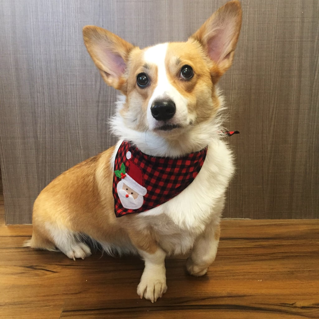 Tail Trends Santa Claus Bandana