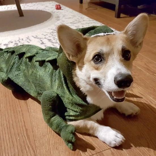 Corgi Stegosaurus Halloween Costumes