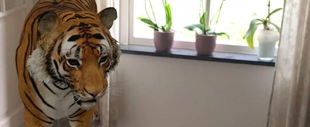 خاصية من غوغل ستمكنكم من التقاط الصور مع الحيوانات في المنزل
