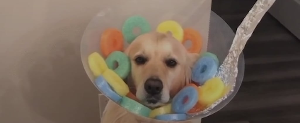 Dog Dressed as Fruit Loops For Halloween