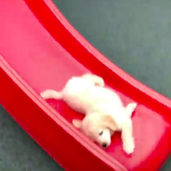 Video of Golden Retriever Puppy Going Down a Slide