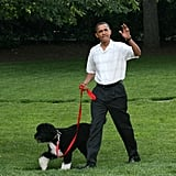 President Barack Obama took the family pet, Bo, for a walk while he hosted the June 2010 Congressional Picnic in DC.