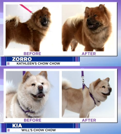Groomer Has It: Do You Agree With This Week's Decision?