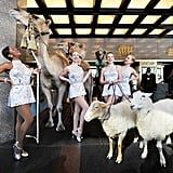 The Rockettes pose with their furry costars.