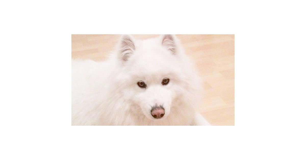 10 Most Expensive Dog Breeds Popsugar Pets