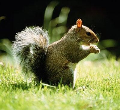 Creature Feature: Squirrel