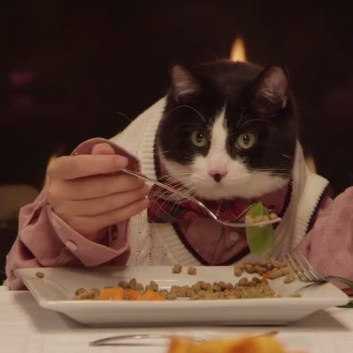 Pets With Human Hands in Freshpet Ad