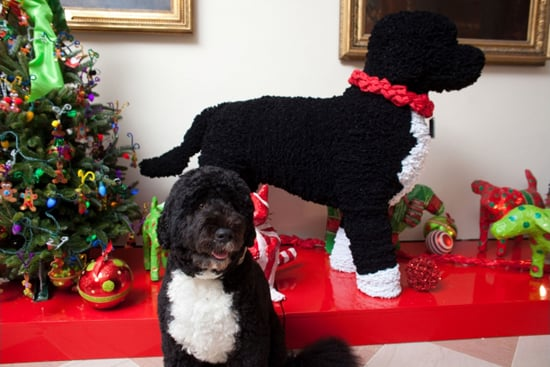 Bo Obama poses in front of a holiday decoration, made from 40,000 pipe cleaners, created in his honor. Source: The White House