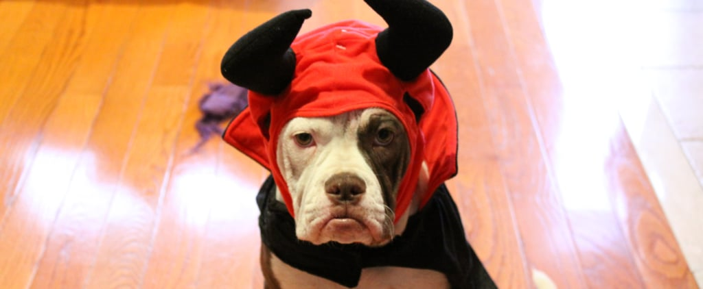 How to Get Scaredy-Cats (and Dogs) Costume-Ready