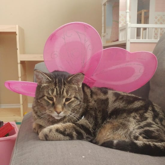 Dad Finds Cat in Fairy Wings