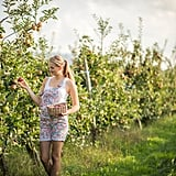 Pick your own fruits from a local orchard for amazingly low prices.