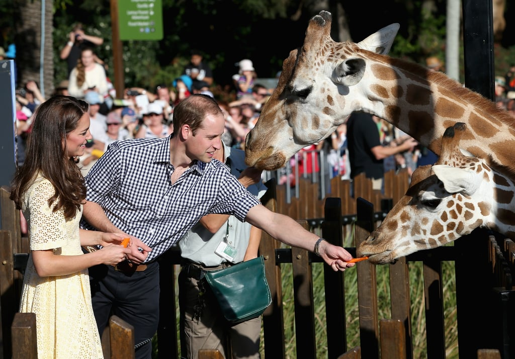 """But I Wanted to Feed the Giraffe."""