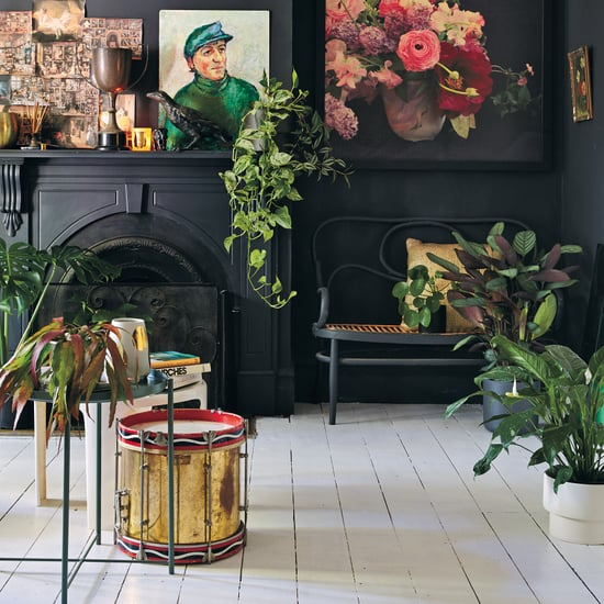 Best Type of Plants to Use Indoors