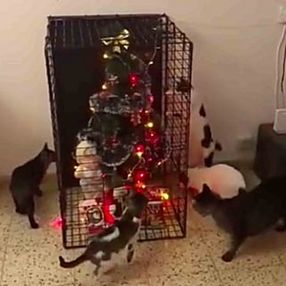 How to Keep Pets Away From the Christmas Tree