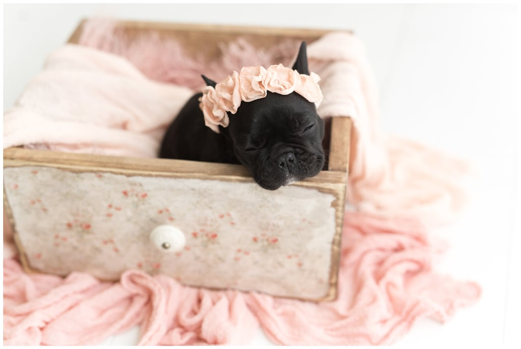 "Hi, I'm Alessia, and in my spare time I dream about the day I move out of my apartment building and can own a French Bulldog (no offense to my two cats, but they're not exactly puppies). So when Brenden Boggs of So Cute Photo sent me ""newborn"" photos of a teeny French Bulldog named Olive, I about died. Olive was a birthday gift (best gift ever) for Brenden's friend Rachel, a fellow photographer, and as soon as Brenden saw how cute Olive was, she reached out to Rachel to see if she'd like a ""newborn shoot"" done. Thank goodness, she said yes. ""I mean does it get any better? I get to photograph this adorably little French bulldog puppy and get puppy snuggles. My heart was full all day,"" Brenden wrote on her blog. See the incredibly precious photos of Olive (who has her own Instagram) ahead — you won't want to use your eyes to see anything else ever again.      Related:                                                                                                           Please Meet Eclipse, the Black Lab Who Takes Herself to the Dog Park Every Day"