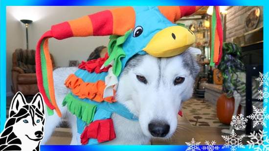 HUSKY REACTS TO HALLOWEEN COSTUME