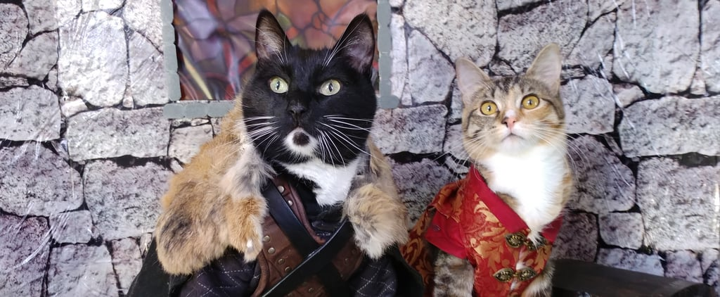 Cats Cosplaying as Famous TV and Movie Characters Photos