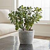Get the Look: Potted Artificial Jade Plant