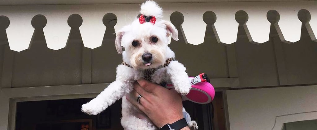 You Can Bring Your Pet With You to Disneyland . . . but There's a Catch