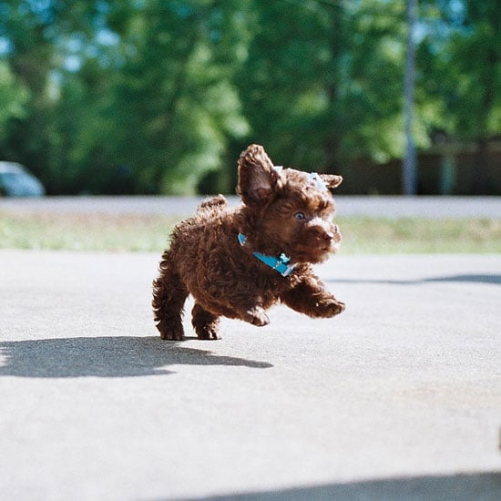 Check out how high I can jump! Source: Flickr User thanker212
