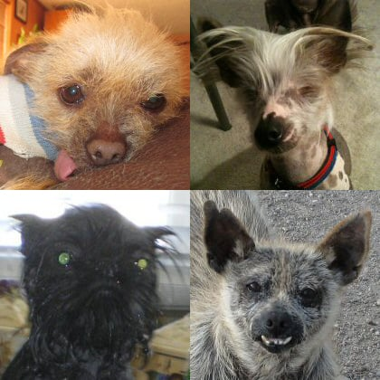 Cute lil Josie, eyeball-less Marco, mischievous Monkey, and motley Mutley Wycuff are definitely up to the competition.