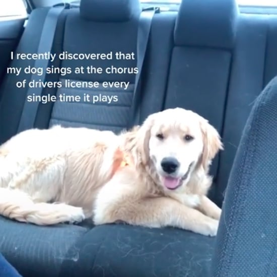 "TikTok of Dog Singing to Olivia Rodrigo's ""Drivers License"""