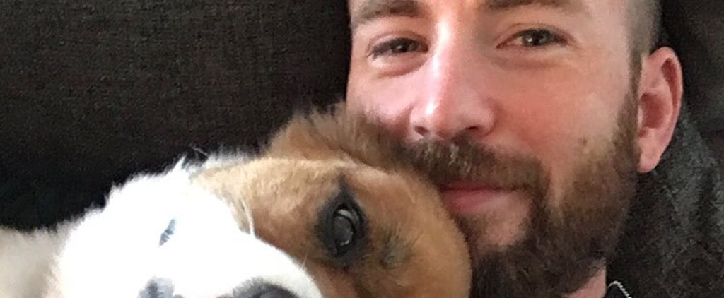 Chris Evans Sewed His Dog's Toy While He Was in Surgery