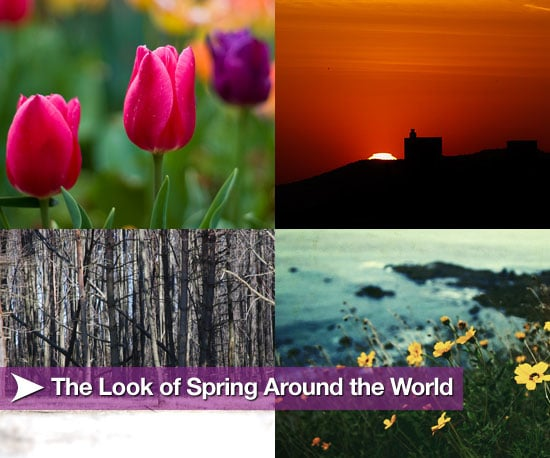 Sugar Shout Out: The Look of Spring Around the World