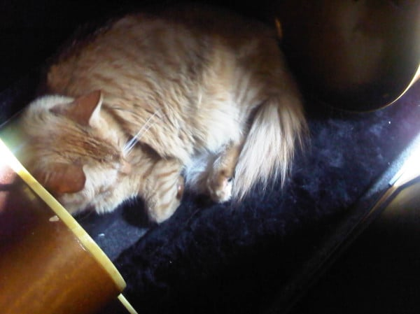 Admittedly, this has nothing to do with fashion, but we make exceptions for cute animals. Is that kitty sleeping in a guitar case the property of Mandy Moore?