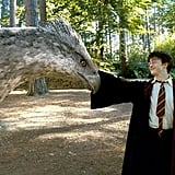 Buckbeak, the Hippogriff