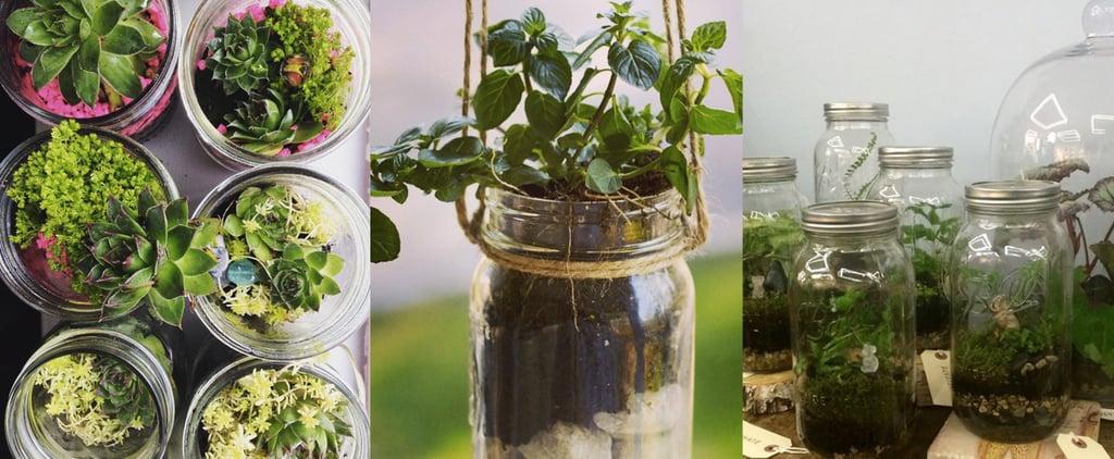 Mason Jar Terrarium Gardens