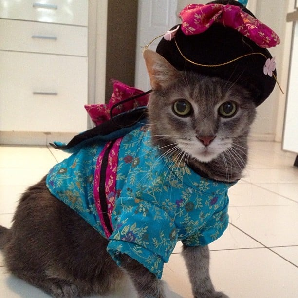 Kimono Cat