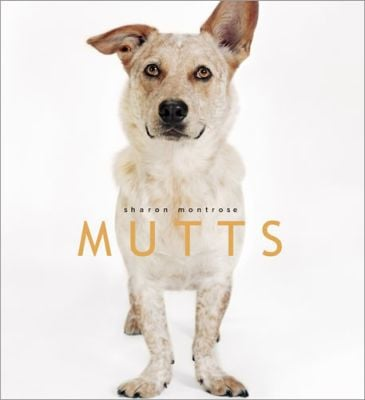 Sharon Montrose's adorable animal prints have been a hot commodity for years now. Her photography book, Mutts ($20), would make a thoughtful gift for the dog-lover in your life. — Britt Stephens, assistant entertainment editor