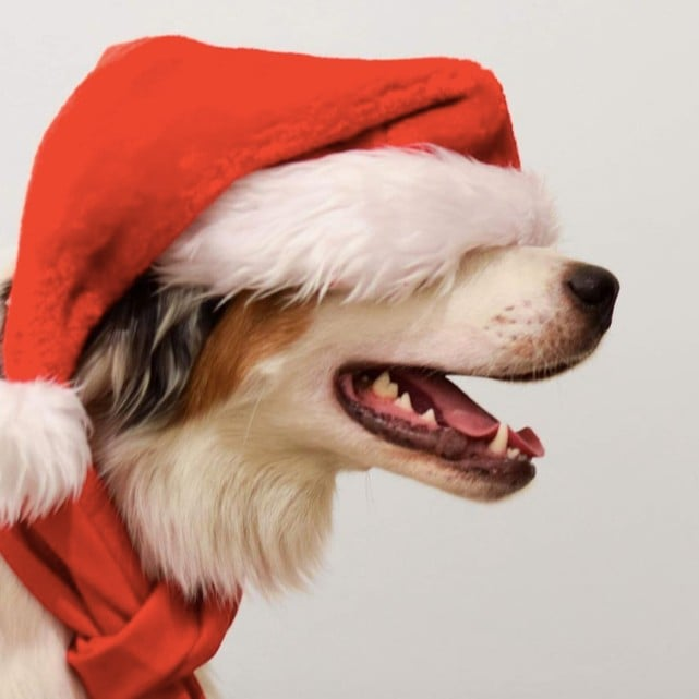 Photos of Dogs Dressed as Santa