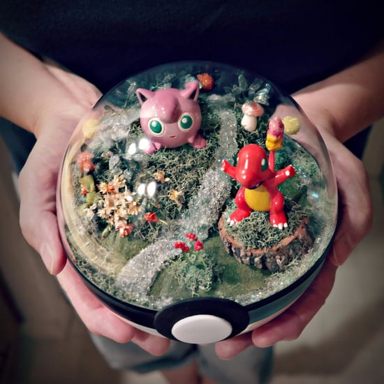 Where Can You Buy Pokemon Terrariums?